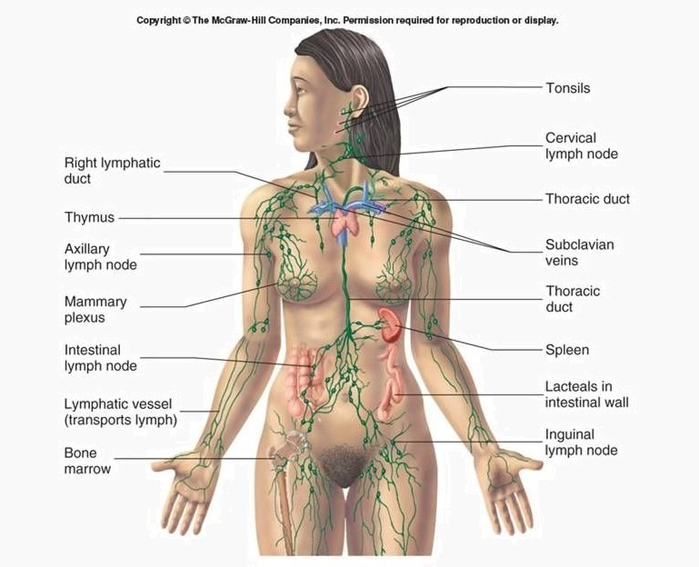 when-to-cleanse-your-lymphatic-system-and-how